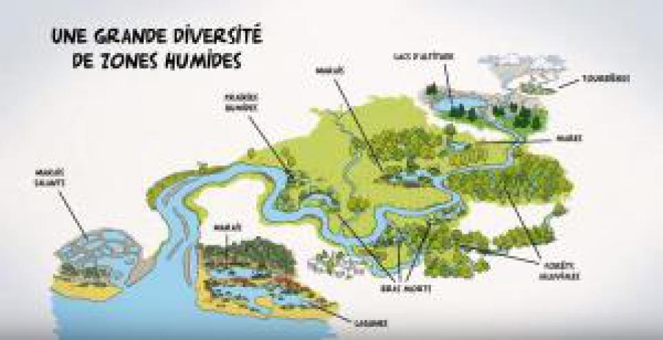 Zones humides, zones utiles.jpg