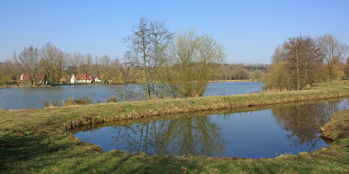 Marais de la grenouillère à Auchy-lès-Hesdin (62)