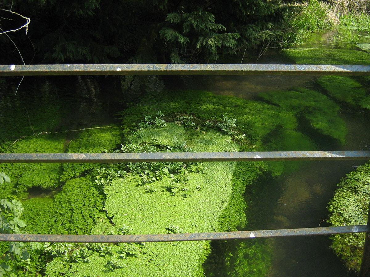 Phénomène d'eutrophisation dans la Canche