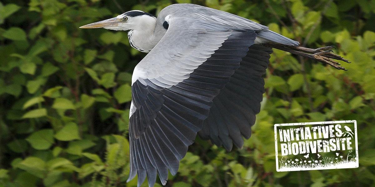heron_initiatives_biodiversite.jpg
