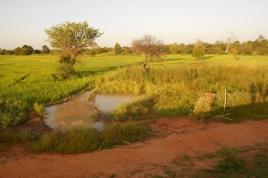 Burkina Faso 2_acourtecuisse-aeap_03172012.jpg