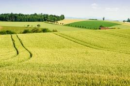 paysage_rural_fotolia_49981554.jpg