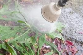 Pesticides dans les communes : la règlementation évolue, la charte d'entretien des espaces publics aussi !